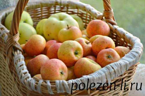 сорт яблок антоновка: особенности плодов и применения