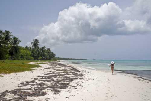 отдых в нижнезаморском, крым: как добраться, жилье, пляжи